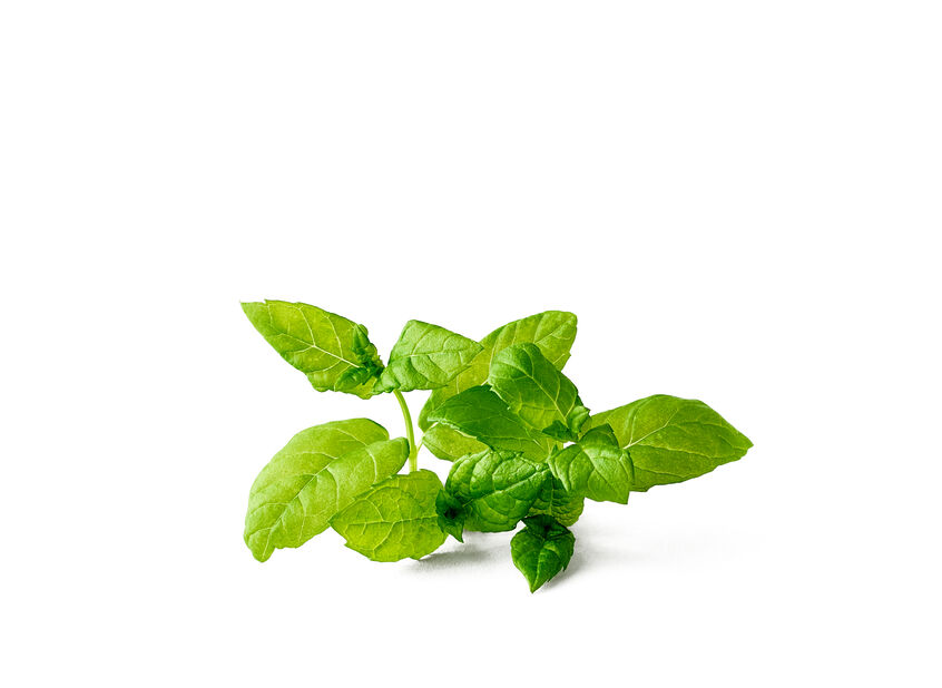 Peppermynte, Ø12 cm, Lilla