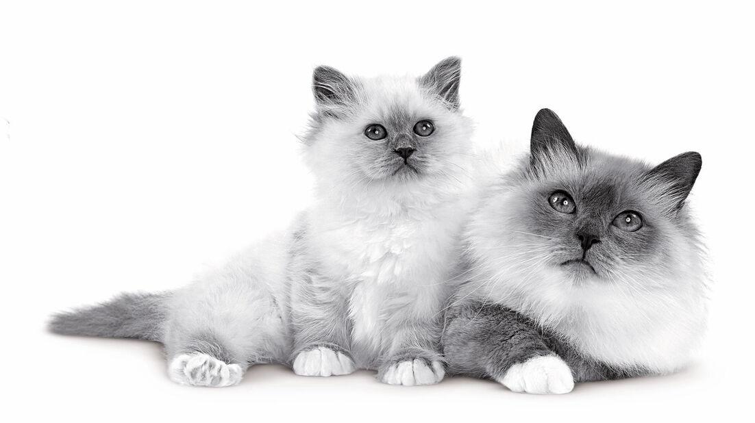 Mother & Babycat 2kg, 2 kg, Flerfarget