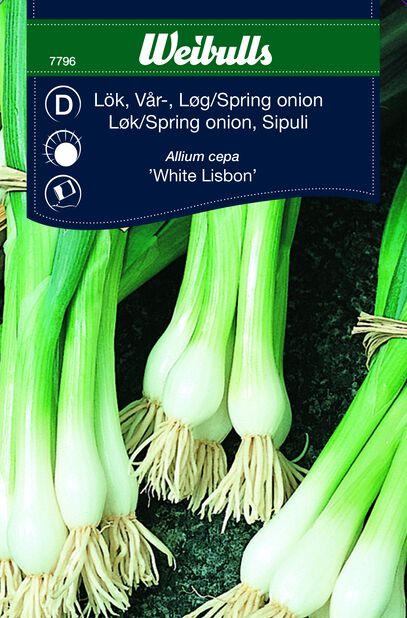 Vårløk 'White Lisbon'
