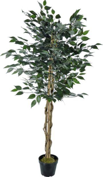 Bjørkefiken H140 cm, grønn/hvit, kunstig