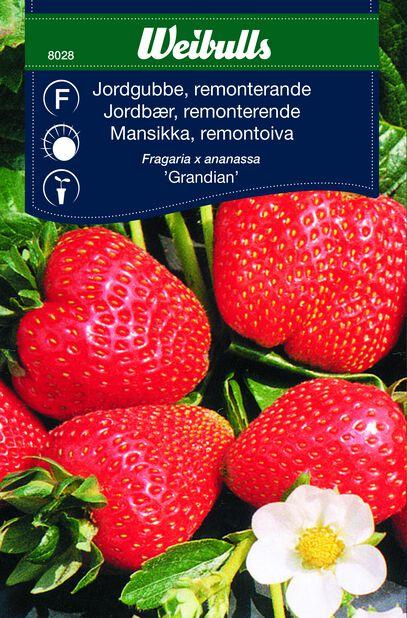 Jordbær 'Grandian'