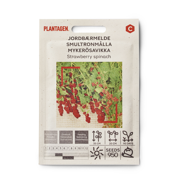 Jordbærmelde 'Strawberry spinach'
