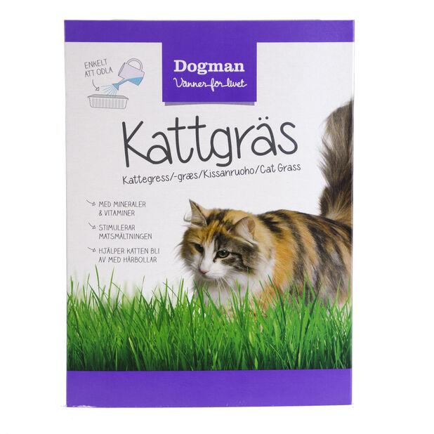 Kattegress, 100 g, Grønn