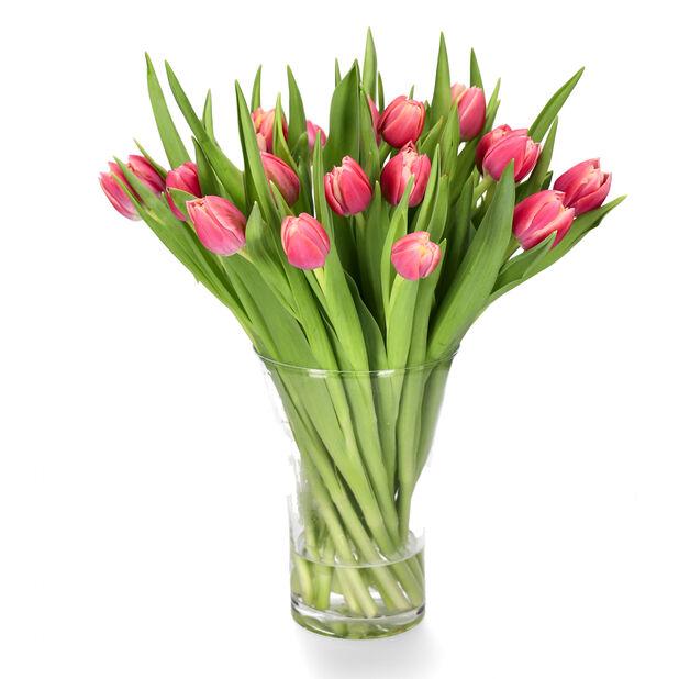 Premium tulipaner 20pk, Høyde 38 cm, Flere farger