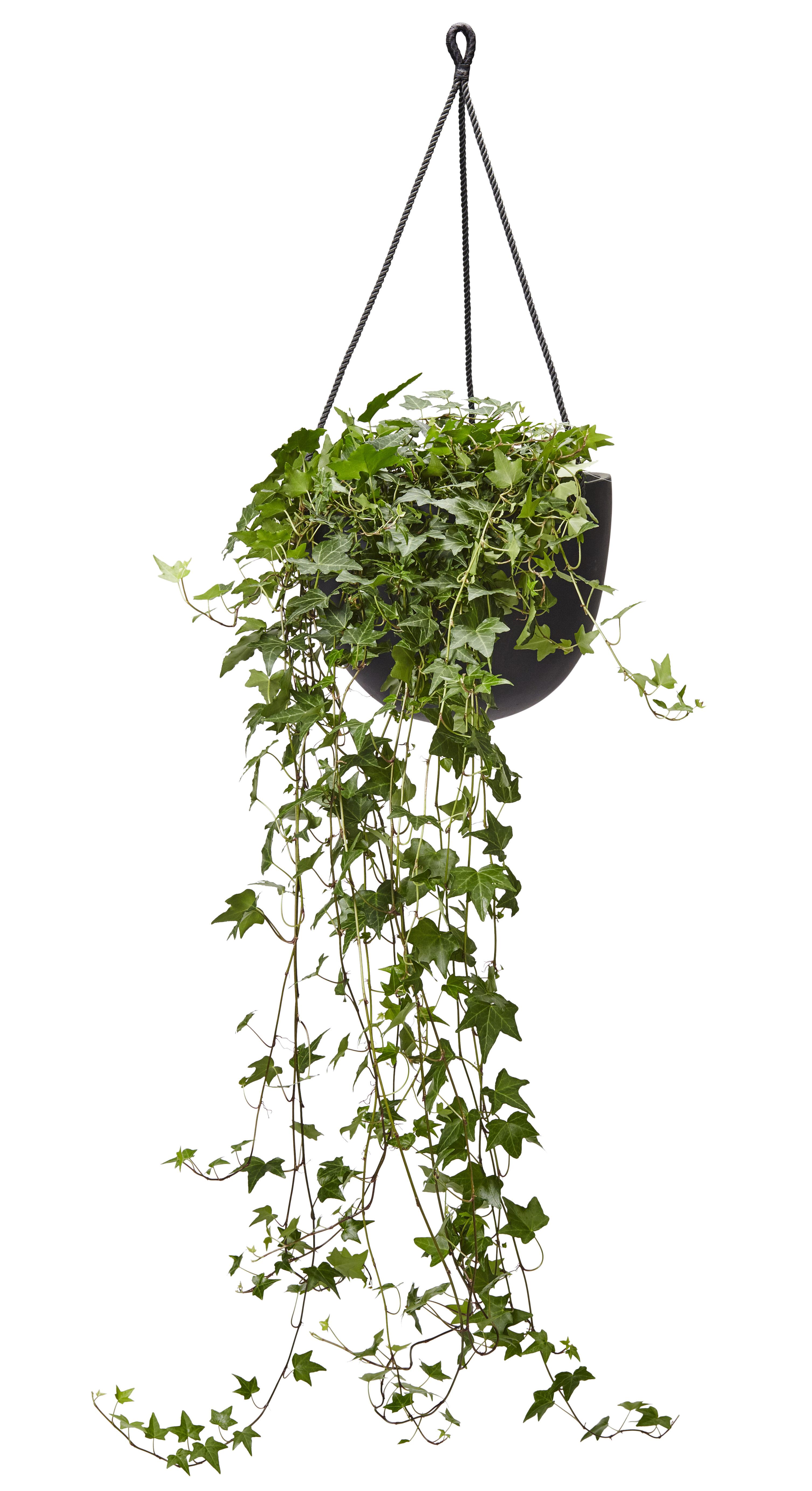 Ti av mine må-ha plantevalg for takterrassen: