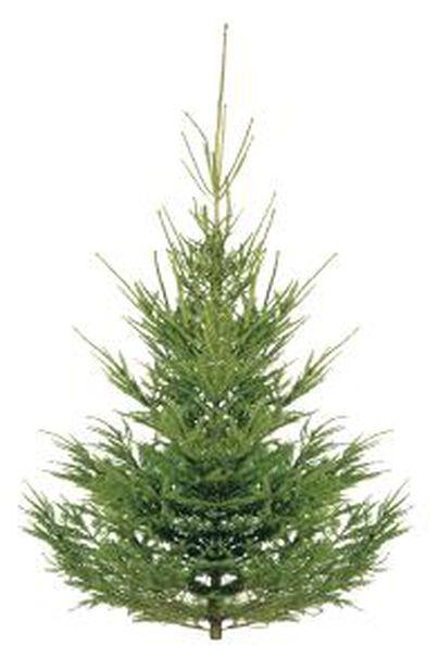 Moderne Juletre Høyde 200 cm Grønn | Plantasjen PA-69
