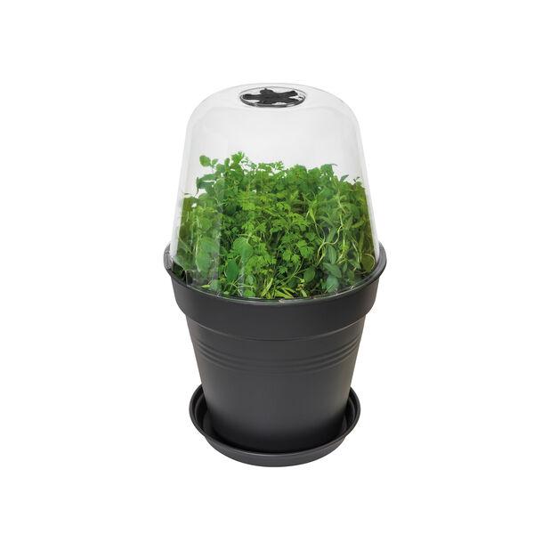 Kultiveringslokk Green Basics, rund, Ø17 cm, Transparent
