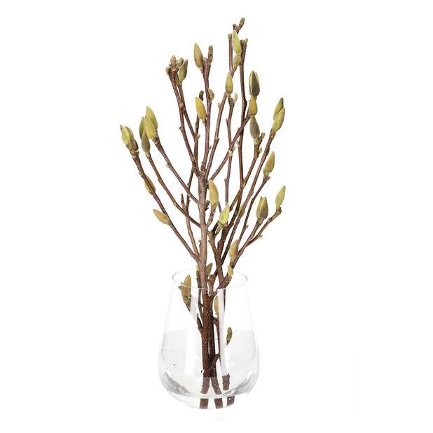 Magnolia, Høyde 60 cm, Flere farger