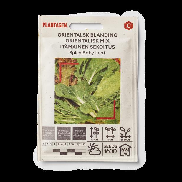 Orientalsk blanding 'Spicy Baby Leaf'