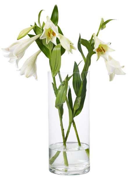 Vase Jennifer H32cm, glass