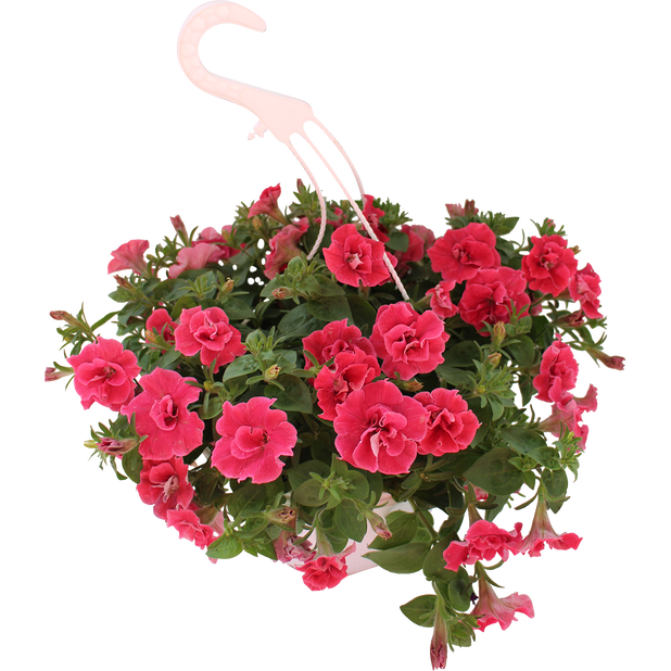 Petunia Origami 'Watermelon', Ø25 cm, Oransje