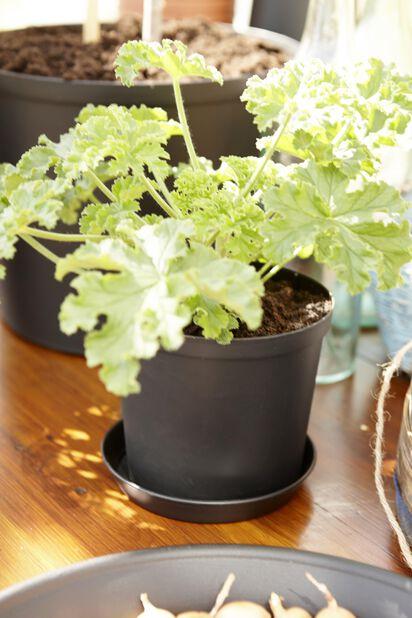 Plantepotte plast Ø18 cm