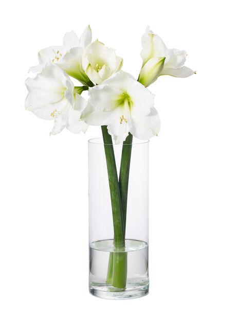 Vase Jennifer, Høyde 32 cm, Transparent