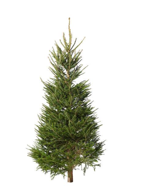 Juletre, Høyde 200-250 cm, Grønn