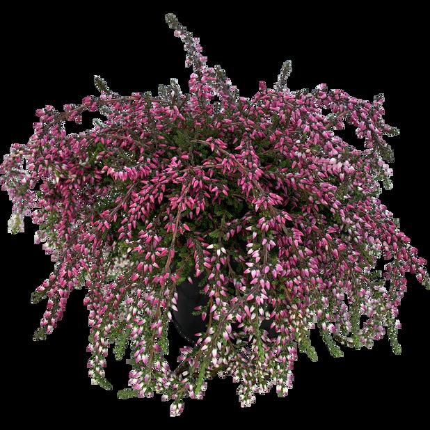Lyng hengende, Ø12 cm, Flere farger