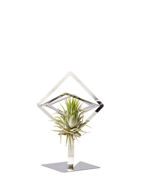 Holder airplants Sam, Høyde 15.5 cm, Sølv