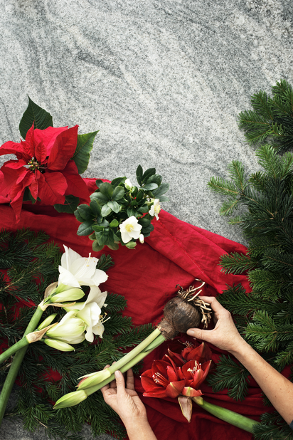 Julerose 'Christmas Carol', Ø9 cm, Hvit