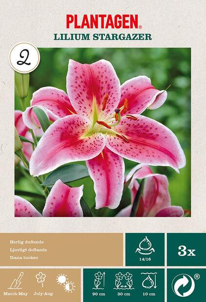 Orientalsk lilje 'Stargazer', Rosa