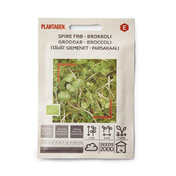 Spire frø Brokkoli