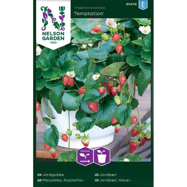 Jordbær 'Temptation', Flerfarget