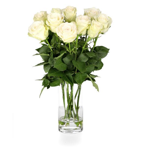 Roser 10pk, Høyde 50 cm, Hvit