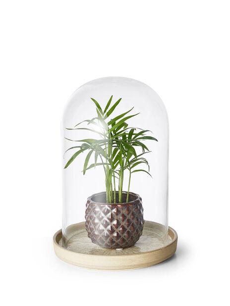 Kuppel i glass, Ø15 cm, Transparent