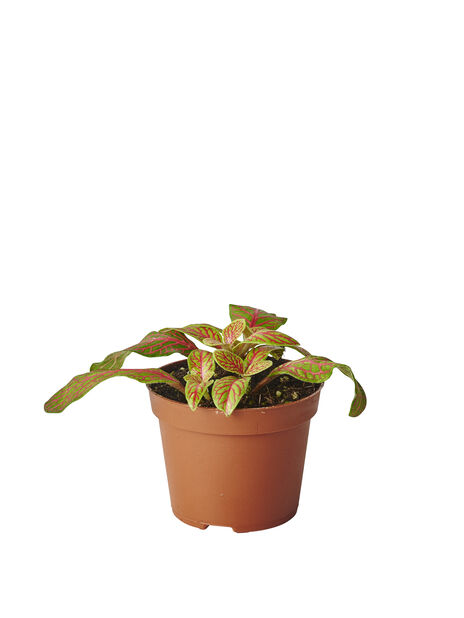 Ormeskinn mix, Høyde 10 cm, Grønn