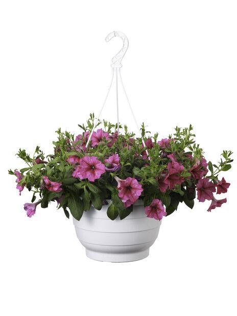 Petunia i ampel, Ø25 cm, Rosa