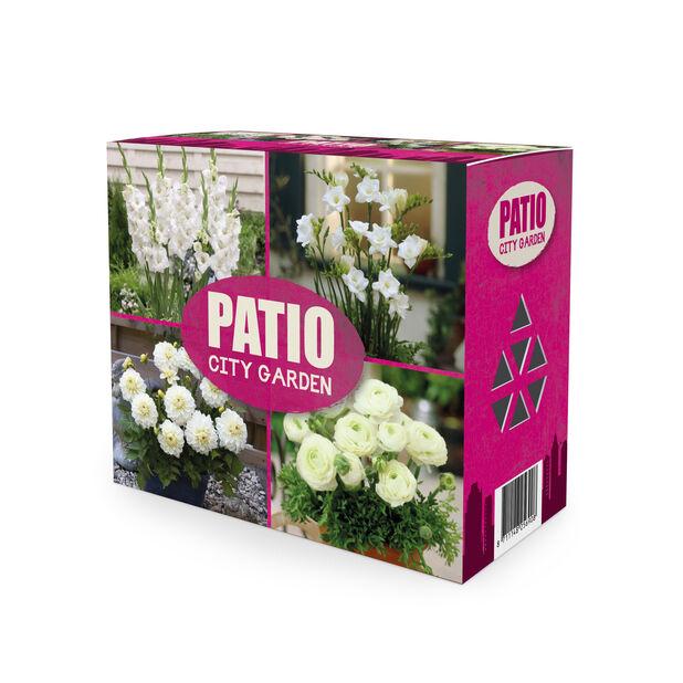 Blomsterløk miks 'Patio City Garden', Hvit