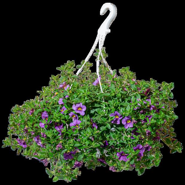 Småblomstret petunia i ampel Ø25cm