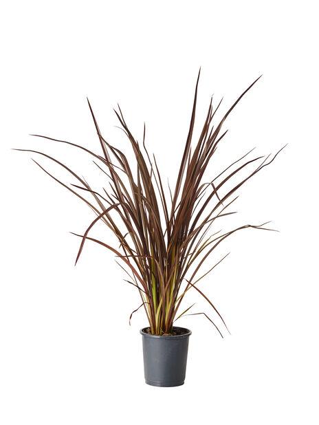New Zealandsk lin, Ø21 cm, Brun