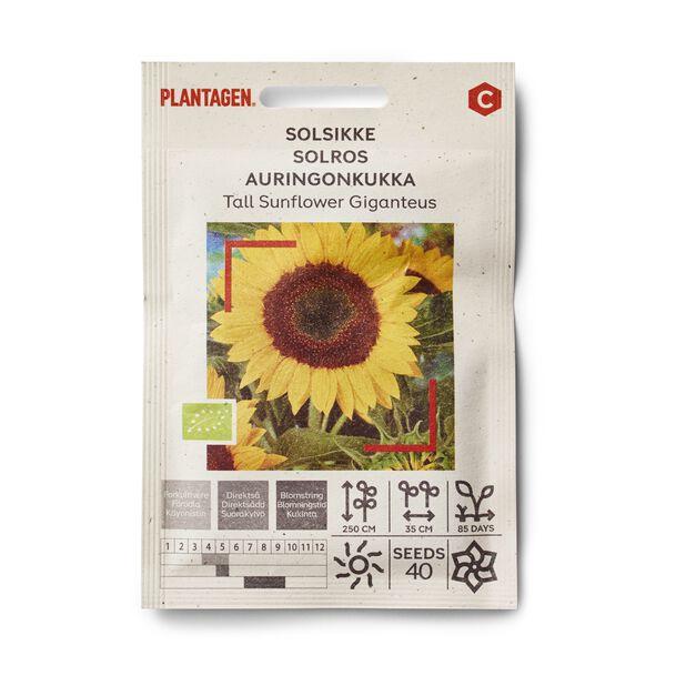 Solsikke 'Tall Sunflower Giganteus'