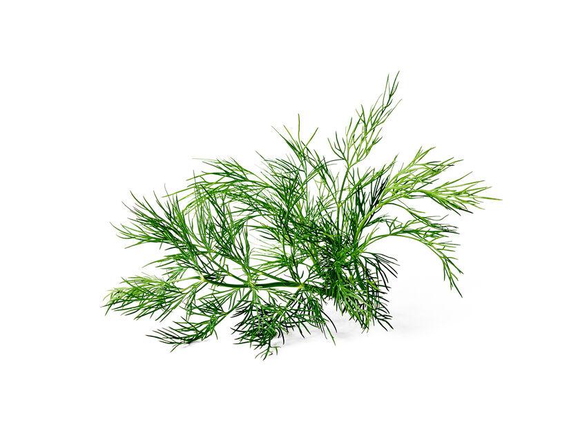 Dill, Ø12 cm, Grønn