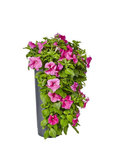 Hengende hage, Ø23 cm, Flere farger
