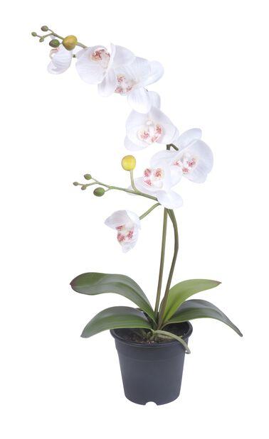 Orkidé H53 cm, hvit, kunstig