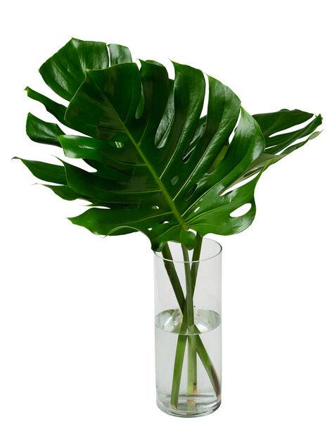 Grønt miks, Høyde 50 cm, Flere farger
