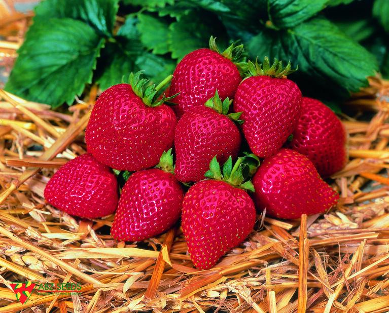 Jordbær 'Sonata' 6-pakk