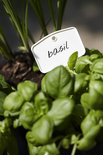 Planteetiketter Green Basics M 5-pack, 5 pk, Hvit