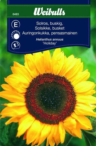 Solsikke 'Holiday'