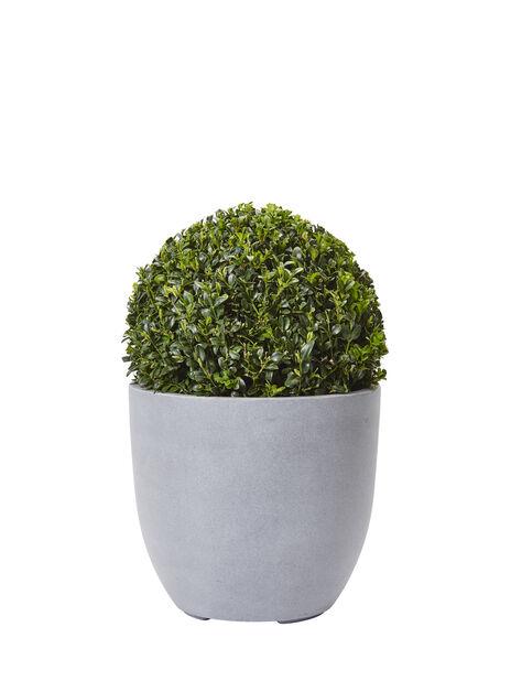Europabuksbom kule, Ø23 cm, Grønn