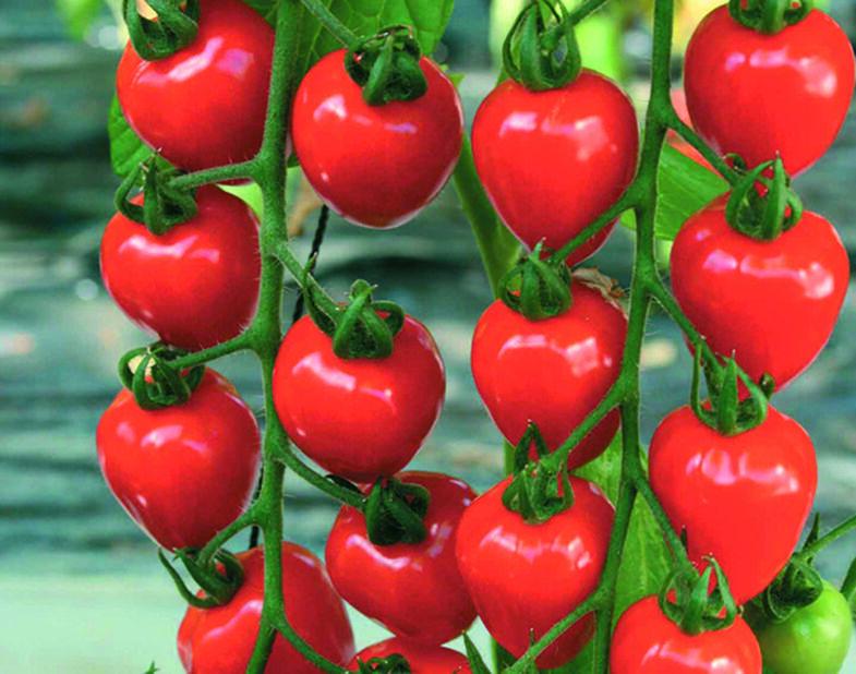 Jordbærtomat 'Berry Garden', Ø12 cm, Rød