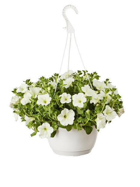 Petunia i ampel, Ø25 cm, Hvit
