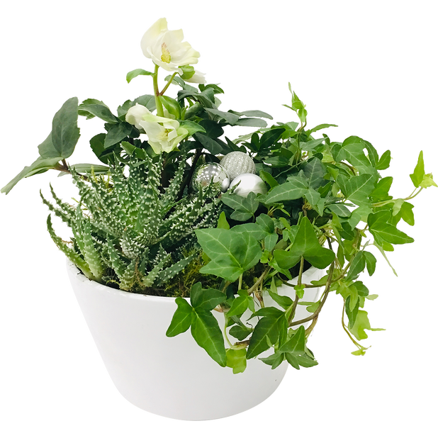 Plantearrangement Folke