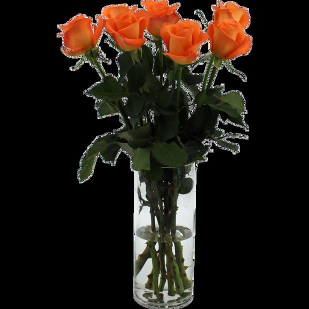 Roser , Høyde 50 cm, Oransje