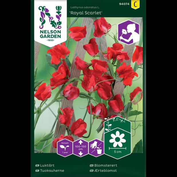 Blomsterert 'Royal Scarlet', Flerfarget