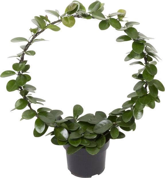 Porselensplante på bøyle, Høyde 80 cm, Grønn