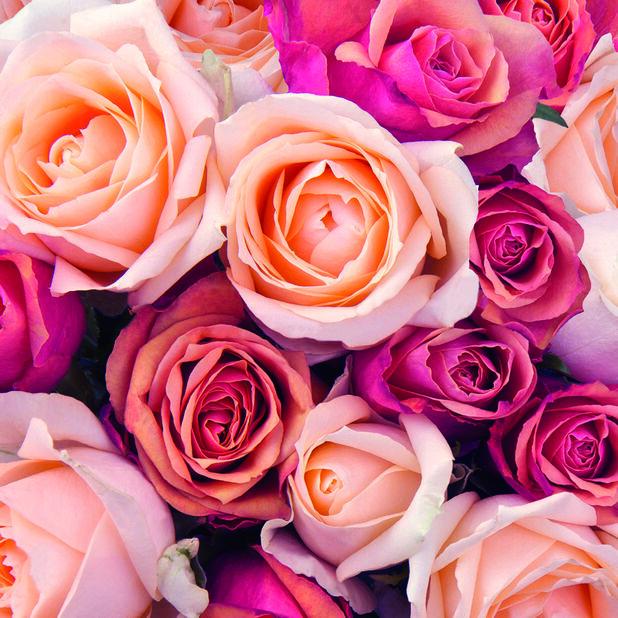 Servietter roser, Bredde 33 cm, Rosa