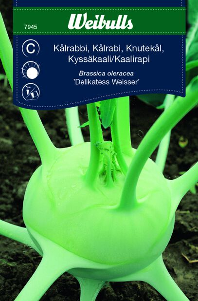 Knutekål 'Delikatess Weisser'