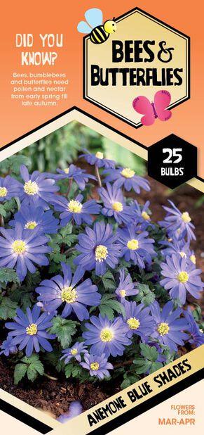 Anemone 'Blue shades', Hvit