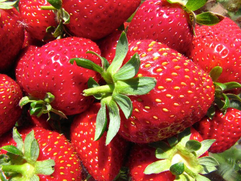 Jordbær 'Korona' 6 pakk, 6 pk, Hvit